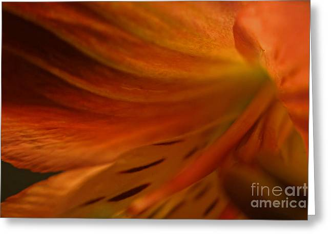 Alstroemeriaceae Greeting Cards - Floral Abstract Greeting Card by Kelly Holm