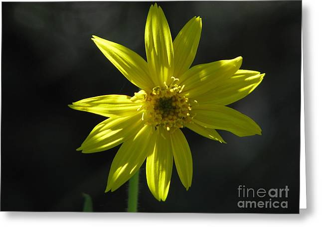 Floral Greeting Cards - Floral Greeting Card by Amanda Barcon