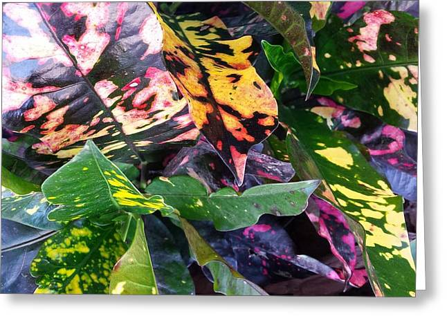 Modern Photographs Greeting Cards - Floral Colors Greeting Card by Ann Hamlin