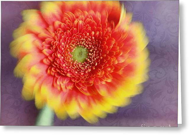 Flower Design Greeting Cards - Floral dance Greeting Card by SK Pfphotography