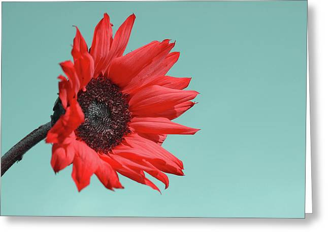 Red Greeting Cards - Floral Energy Greeting Card by Aimelle