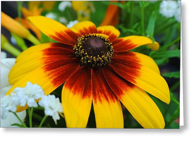 Floral Fantasy Greeting Card by Frozen in Time Fine Art Photography