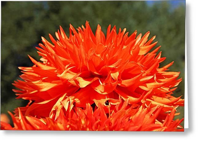 Floral Orange Dahlia Flowers Art Prints Greeting Card by Baslee Troutman Floral Fine Art Prints
