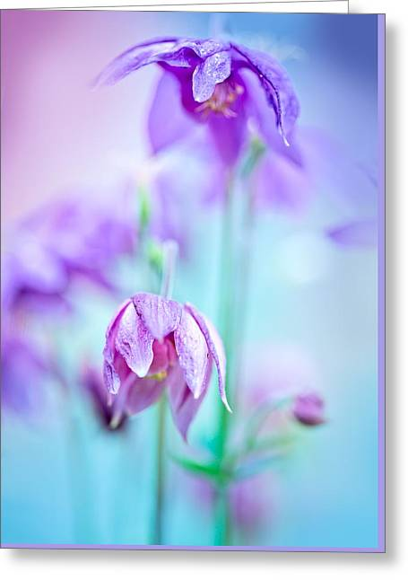 Many Greeting Cards - Floral soft tender  background from blue fresh cornflower defocused  macro image Greeting Card by Oksana Ariskina