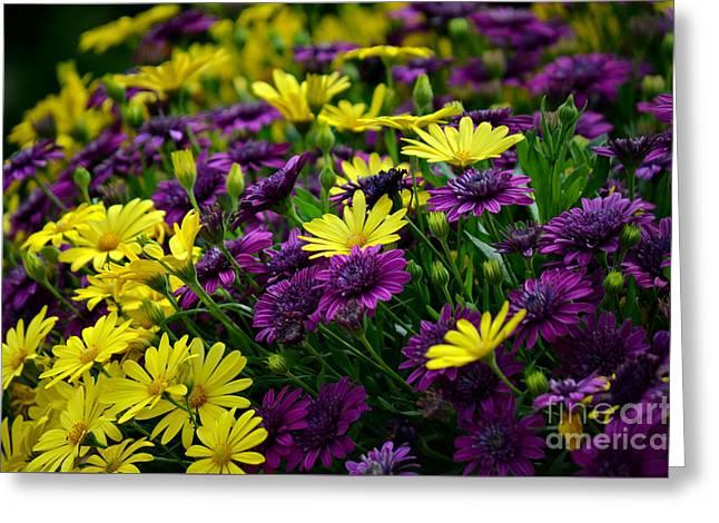Botanical Greeting Cards - Floral Treasure Greeting Card by Deb Halloran
