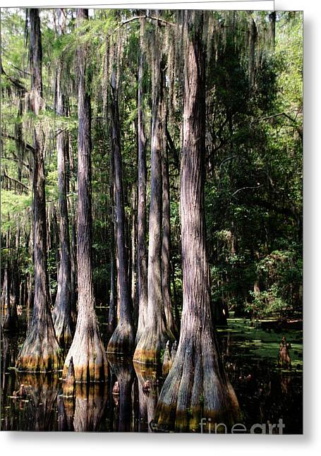 Mangrove Forest Greeting Cards - Florida Beauty 3 Greeting Card by Andrea Anderegg