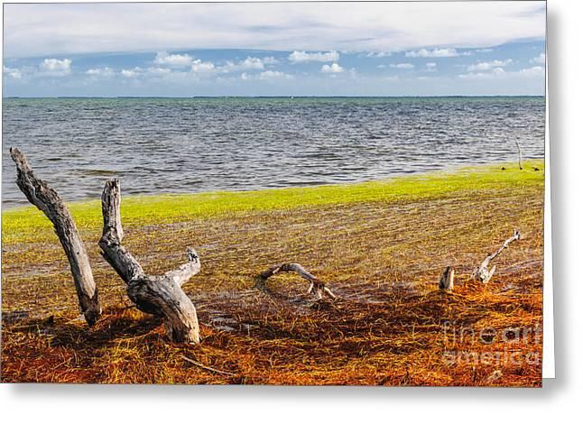 Florida Keys Colors Greeting Card by Elena Elisseeva