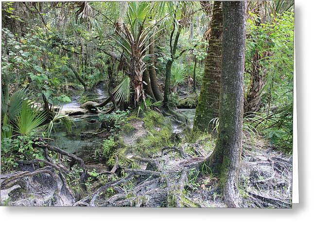 Tree Roots Photographs Greeting Cards - Florida Landscape - Lithia Springs Greeting Card by Carol Groenen