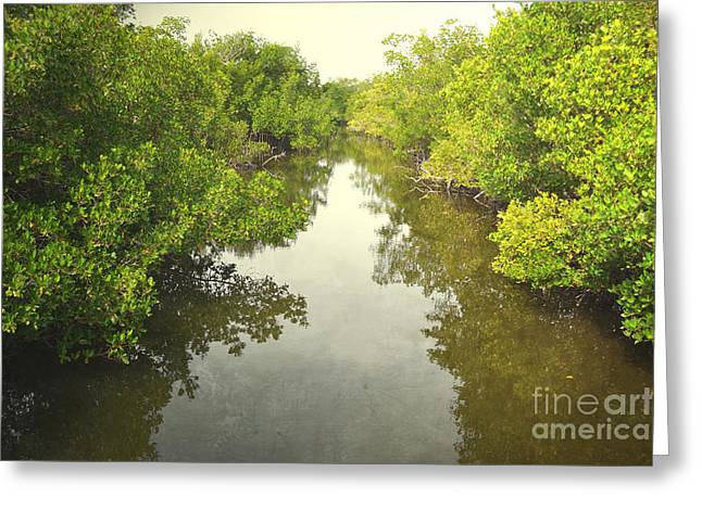 Mangrove Forest Greeting Cards - Florida Mangrove River Trees Greeting Card by Andrea Hazel Ihlefeld
