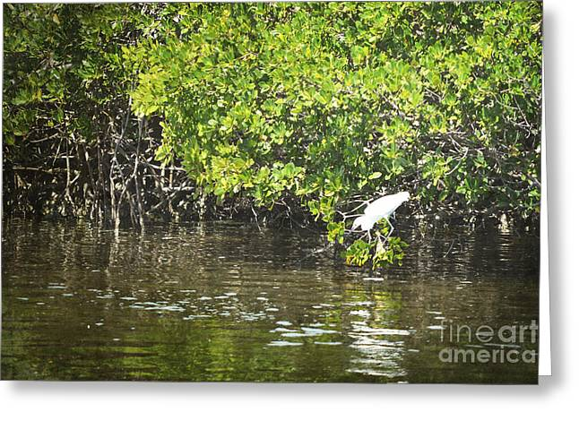 Mangrove Forest Greeting Cards - Florida Mangroves Bird Greeting Card by Andrea Hazel Ihlefeld