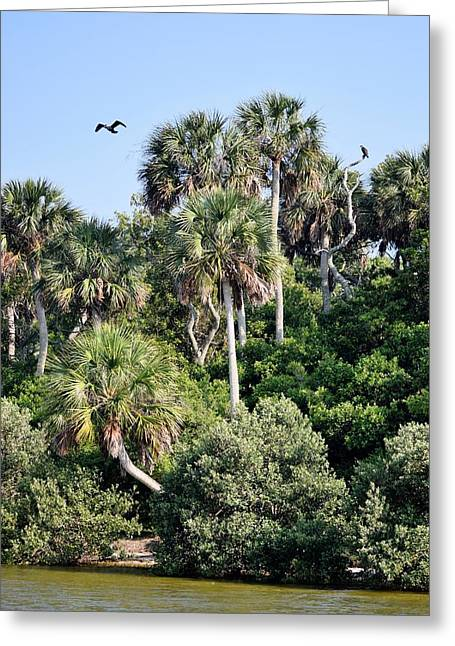 Cedar Key Greeting Cards - Florida Nature Coast Islands 1 Greeting Card by Sheri McLeroy