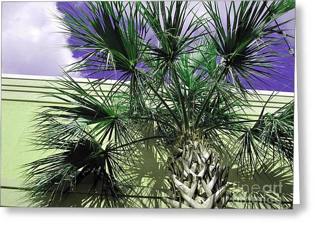 Botanical Greeting Cards - Florida Palm   1 Greeting Card by Susanne Van Hulst
