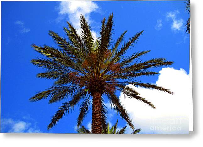 Flowers Greeting Cards - Florida Palm   6 Greeting Card by Susanne Van Hulst
