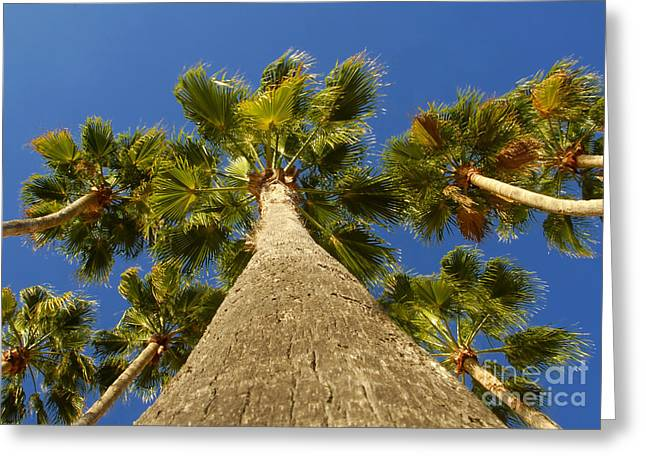 Palm Tree Greeting Cards Greeting Cards - Florida Palms Greeting Card by David Lee Thompson