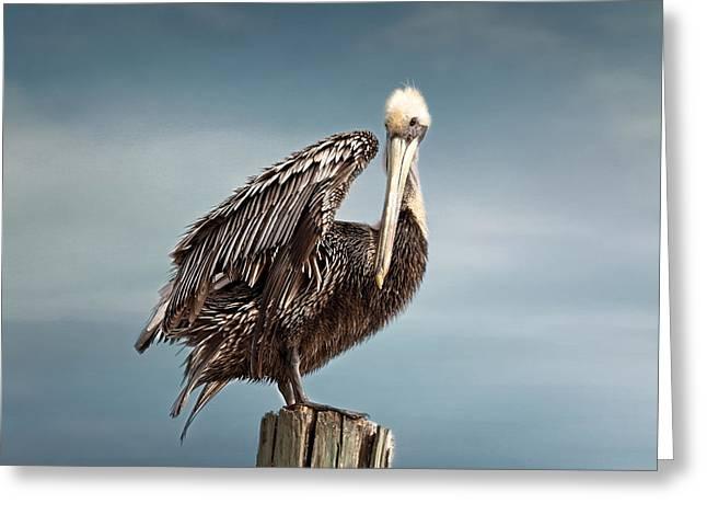 Gracefully Greeting Cards - Florida Pelican Posing Greeting Card by Kim Hojnacki