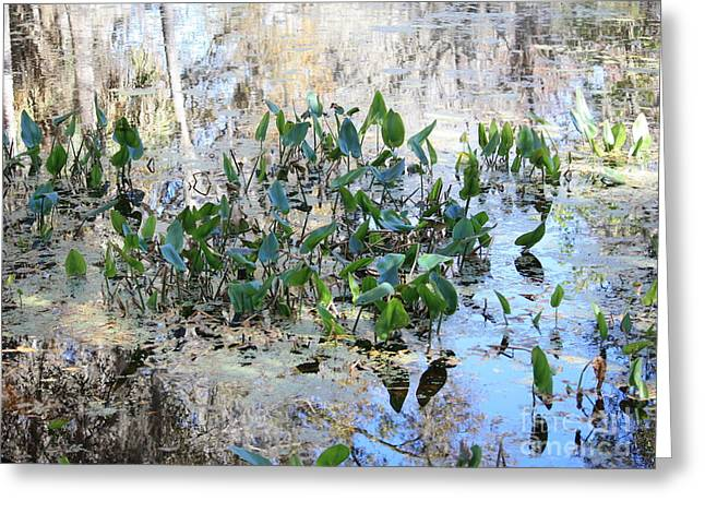 Florida Pond Greeting Cards - Florida Pond Greeting Card by Carol Groenen