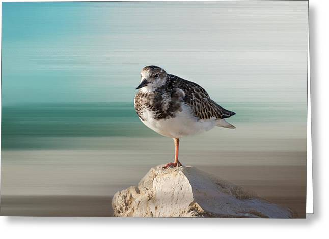 Kim Photographs Greeting Cards - Florida Shore Bird - Ruddy Turnstone Greeting Card by Kim Hojnacki