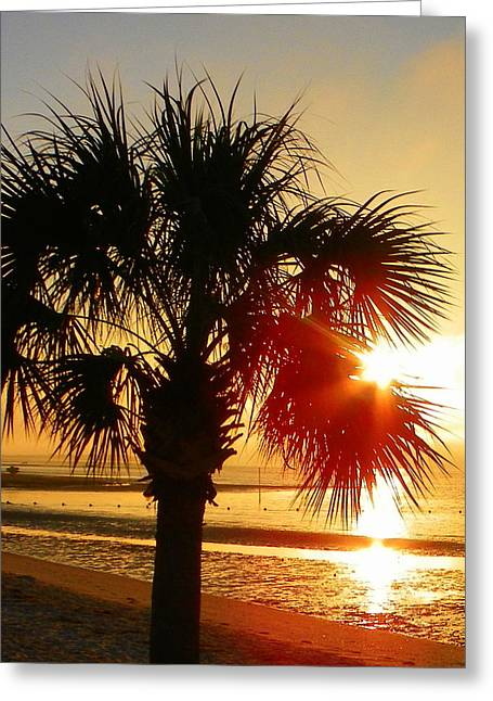 Florida Sunrise Greeting Card by Sheri McLeroy