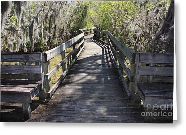 Carol Groenen Greeting Cards - Florida Swamp Boardwalk Greeting Card by Carol Groenen