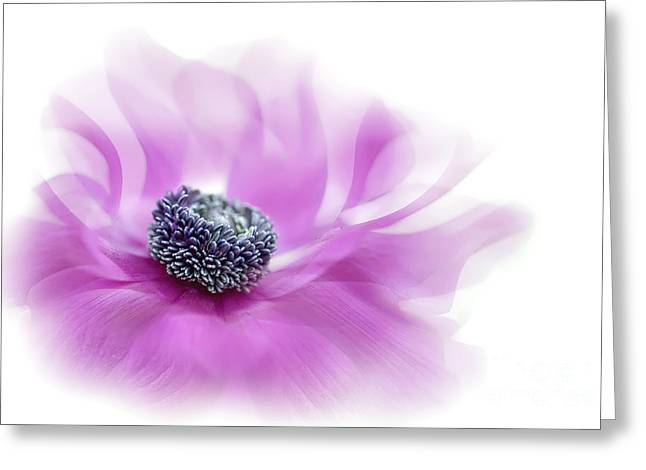Anemone Greeting Cards - Flow Greeting Card by Jacky Parker