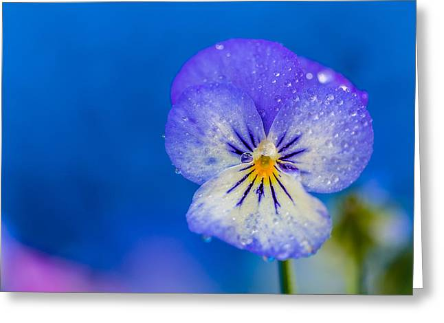 Canon 6d Digital Art Greeting Cards - Flower 11 July Greeting Card by Keith Hawley