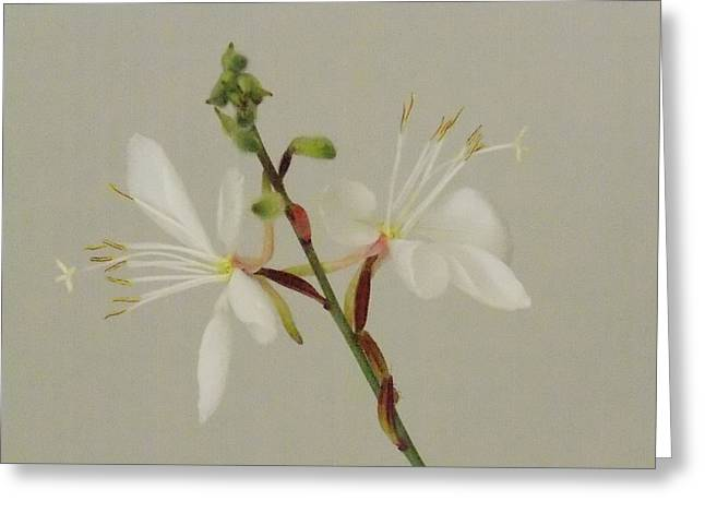 Flower 8-12 Greeting Card by Skip Willits