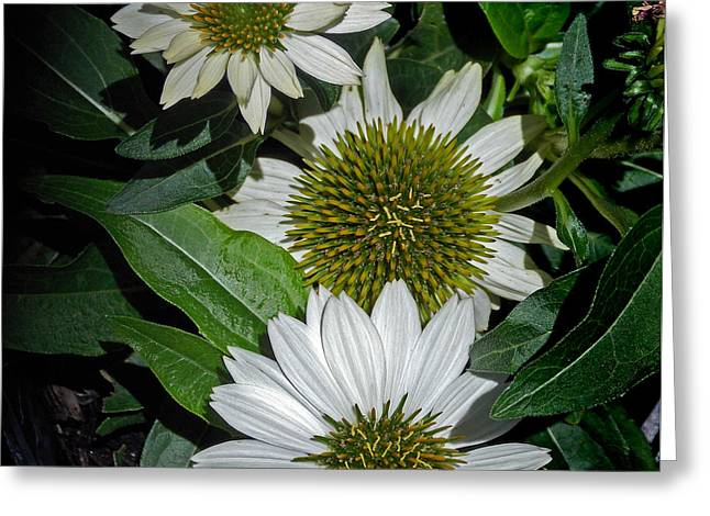 Flower 8-13 Greeting Card by Skip Willits