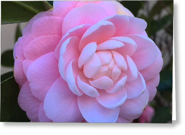 Flower 8-15 Greeting Card by Skip Willits