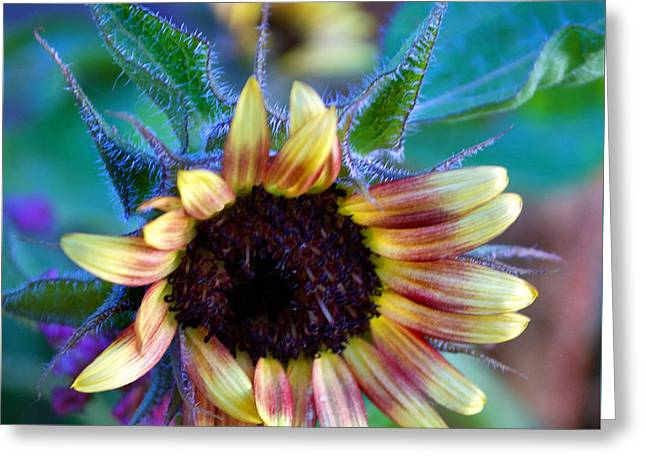 Flower 8-8 Greeting Card by Skip Willits