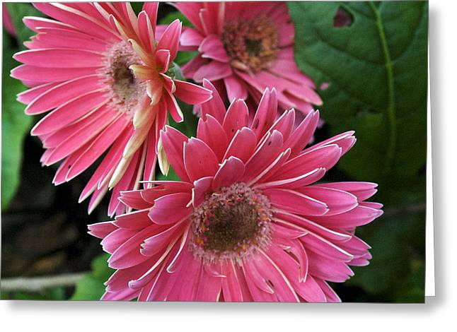 Flower 8 Greeting Card by Skip Willits