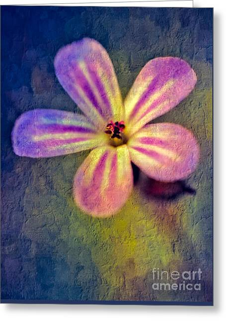 Pink Digital Greeting Cards - Flower Greeting Card by Adrian Evans