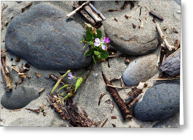 Beach Greeting Cards - Flower Amid Rocks Greeting Card by Bonnie Bruno