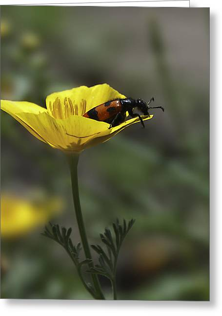 Flower And Bug Greeting Card by Svetlana Sewell