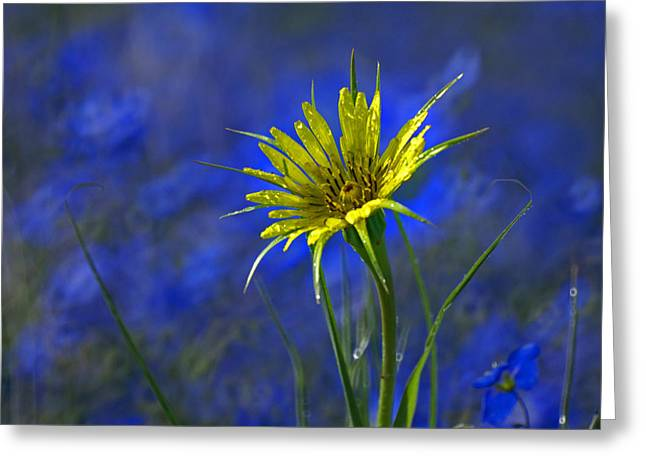 Floral Greeting Cards - Flower and Flax Greeting Card by Heather Coen