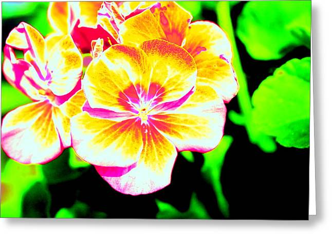 Color Enhanced Greeting Cards - Flower and More by Earls Photography Greeting Card by Earl  Eells a