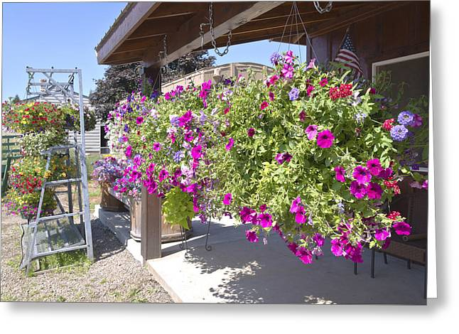 Gravel Road Greeting Cards - Flower basket and racks displays outside a store. Greeting Card by Gino Rigucci
