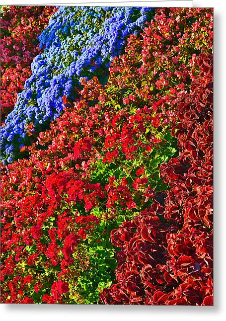 Stigma Greeting Cards - Flower carpet. Greeting Card by Andy Za