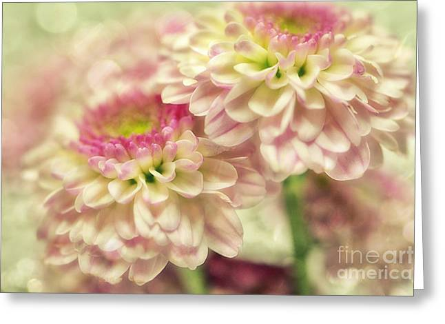 Flower D3 Greeting Card by SK Pfphotography