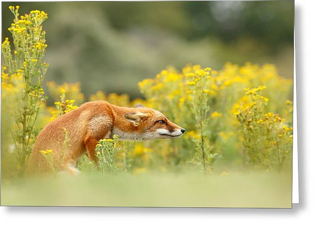 Canid Greeting Cards - Flower Fox Greeting Card by Roeselien Raimond