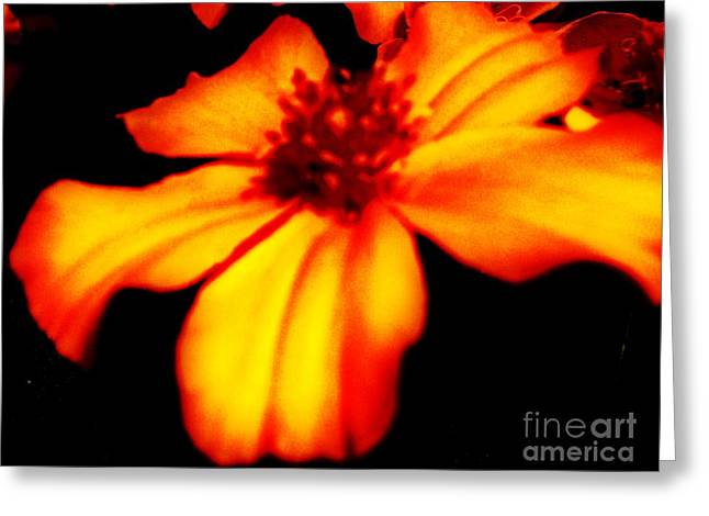 Floral Pictures Greeting Cards - Flower From The Sun Greeting Card by Marsha Heiken