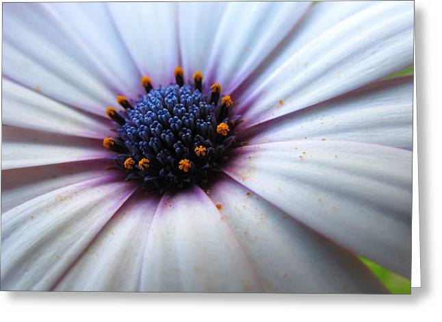 Flower Blossom Greeting Cards - Flower III Greeting Card by Dhouib Skander