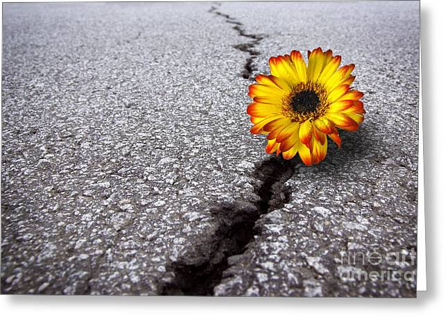 Growing Greeting Cards - Flower in asphalt Greeting Card by Carlos Caetano