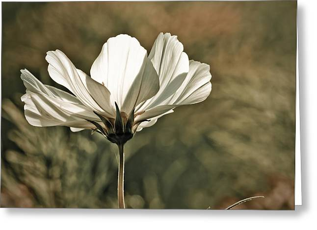 Flower In The Sun Greeting Card by Maggie Terlecki