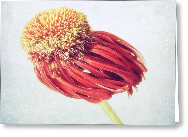 Flower In The Wind Greeting Card by SK Pfphotography