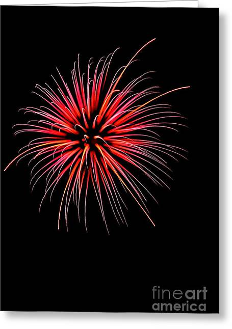 4th July Greeting Cards - Flower No 2 4925 Greeting Card by Ken DePue