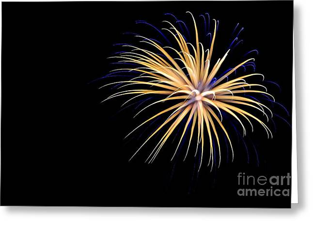 4th July Greeting Cards - Flower No 3 4926 Greeting Card by Ken DePue