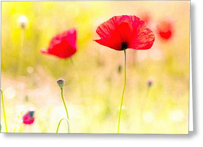 Scene Greeting Cards - Flower of red poppy 1 Greeting Card by Lanjee Chee