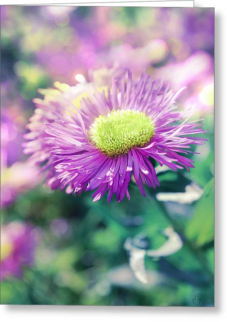 Faa Exclusive Greeting Cards - Flower of summer Greeting Card by Irina Effa