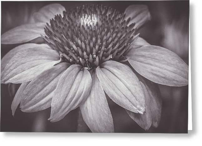 Tangerine Greeting Cards - Flower - Orange Coneflower - Sunshine - Black and White - Macro Greeting Card by Black Brook Photography