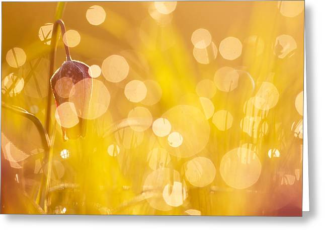 Dew Covered Flower Greeting Cards - Flower Party II Greeting Card by Roeselien Raimond